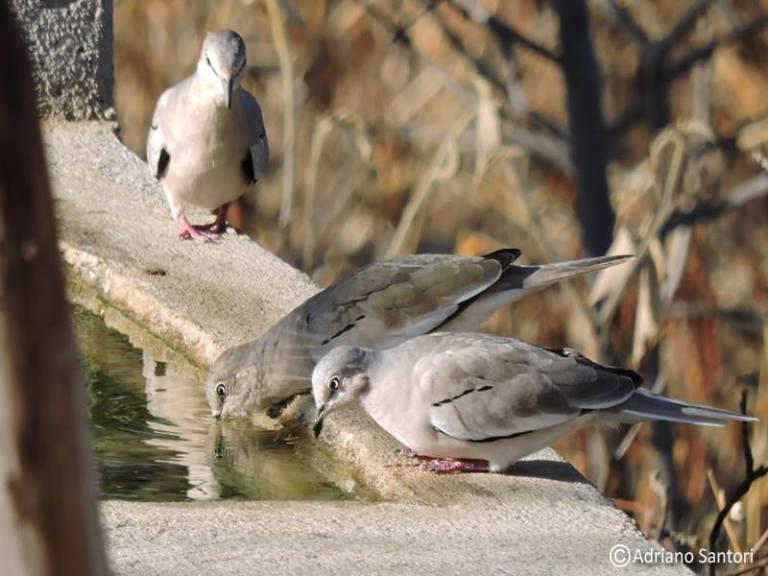 rolinhas-brancas-adriano-santori-guyraimpiakaba
